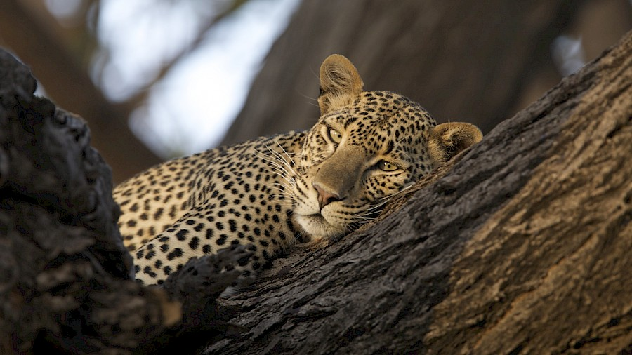 LUXUSREISEN - TRAVEL IN LUXURY_LUXUS SAFARIS AFRIKA